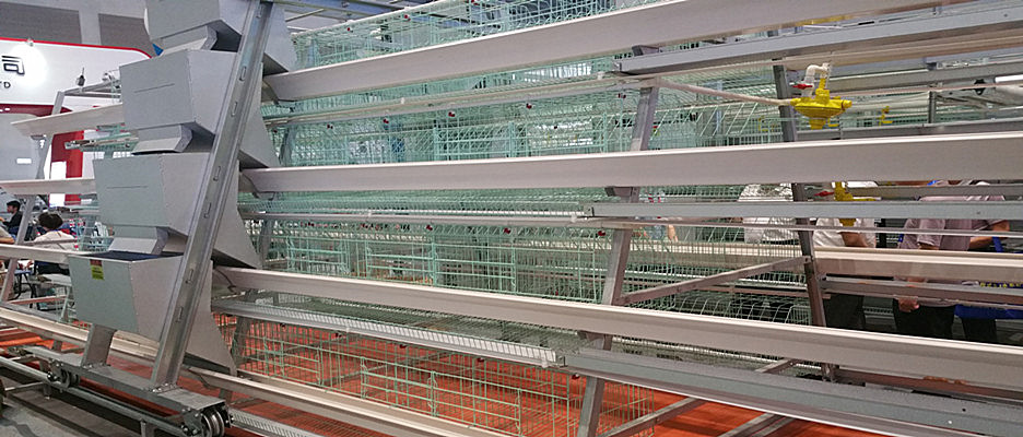Humanized poultry cage design......